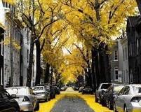 خیابانهای جادویی / تصاویر